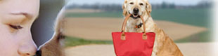list your property on pet friendly north america