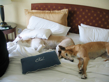 pet friendly hotels Havasu